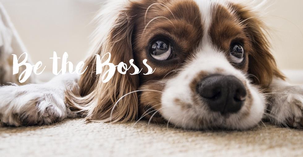 pet-store-be-the-boss